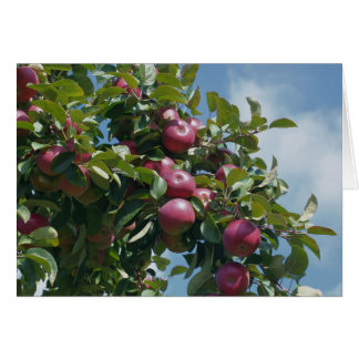 Apples On Tree Nature Photography Card