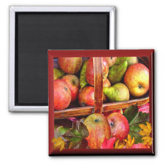 APPLES  & PEARS  ~ Magnet