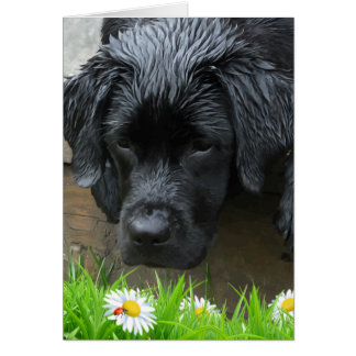 Appreciate the Little Things - Black Labrador Card