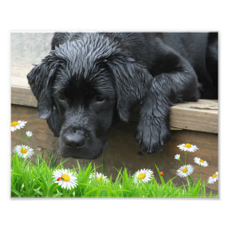 Appreciate the Little Things - Black Labrador Photo Print