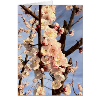 apricot blossoms card