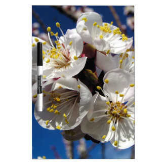 Apricot Blossoms Dry-Erase Boards
