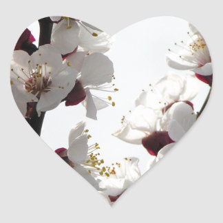 Apricot blossoms from the orchard heart sticker