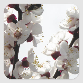Apricot blossoms from the orchard square sticker