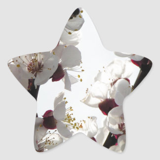 Apricot blossoms from the orchard star sticker