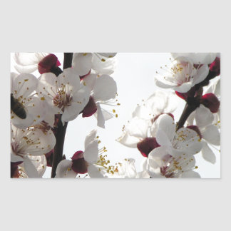 Apricot blossoms from the orchard sticker