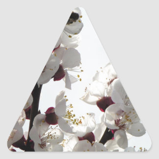 Apricot blossoms from the orchard triangle sticker
