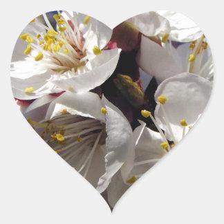 Apricot Blossoms Heart Sticker
