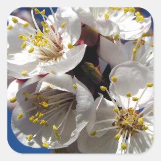 Apricot Blossoms Square Sticker