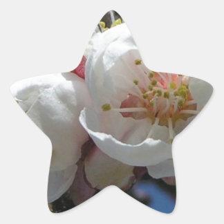 apricot blossoms star sticker