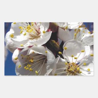 Apricot Blossoms Sticker