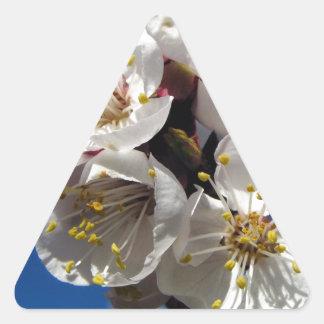 Apricot Blossoms Triangle Sticker