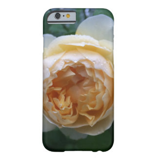Apricot Cabbage Rose iPhone Case