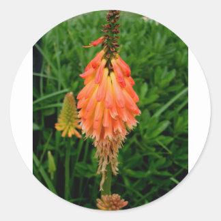 Apricot Fleur Round Sticker