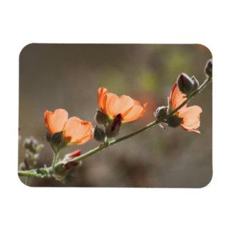 Apricot Mallow Flowers Flexible Photo Magnet