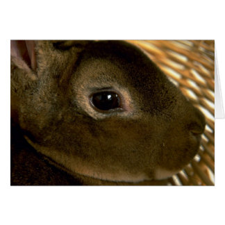Apricot Rex Rabbit Card