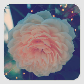 Apricot Rose Classic Sticker