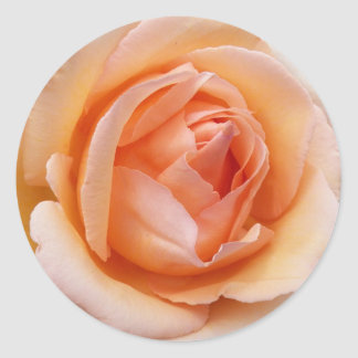 Apricot Rose Floral Classic Round Sticker