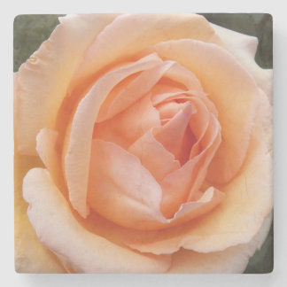 Apricot Rose Floral Stone Coaster