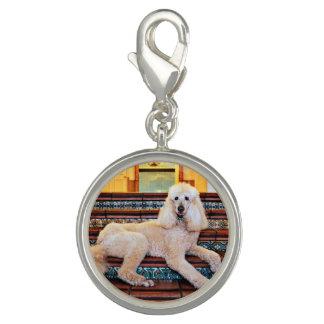 Apricot Standard Poodle - Bocelli Charm