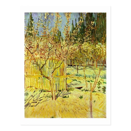 Apricot Trees in Blossom, Van Gogh Fine Art Postcard