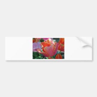 Apricot Tulip Bumper Sticker