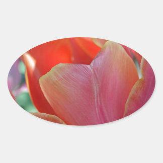 Apricot Tulip Oval Sticker