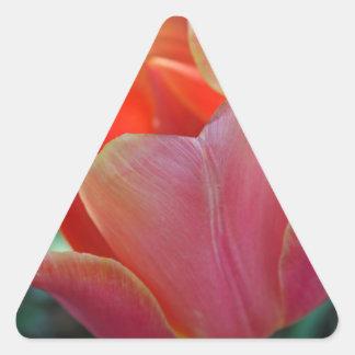 Apricot Tulip Triangle Sticker