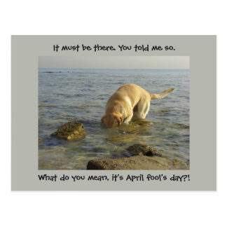 April fool's day - Goofy Labrador Postcard