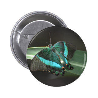 Aqua and Black Butterfly Pinback Buttons