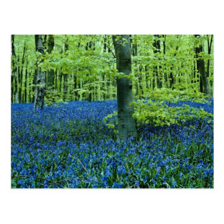 Aqua Bluebell Woods flowers Postcard