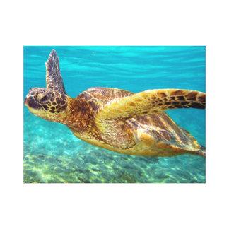 Aqua Sea Turtle Stretched Canvas Print