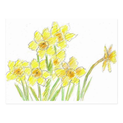 Aquarelle de jaune de carte postale de jonquilles