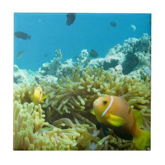 Aquarium Fish Tile