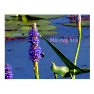 Aquatic Brilliantly Colored Missing You Postcard