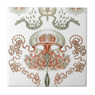 Aquatic Life ~ Haeckel ~ Jellyfish Ceramics Tile