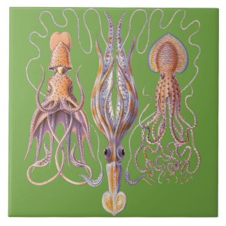 Aquatic Life Haeckel Octopus Ceramics Tile