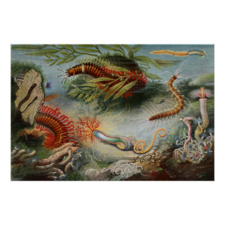 Aquatic Life Of Sea Creatures Poster