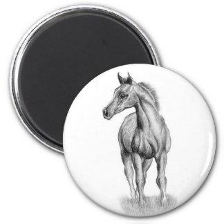 Arab foal magnet