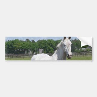 Arab Horse Bumper Sticker