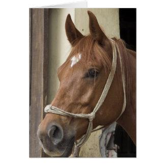 Arab Horses Greeting Card