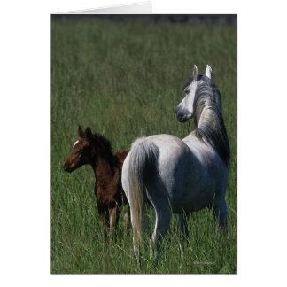 Arab Mare & Foal Card