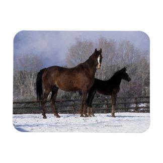 Arab Mare & Foal in Snow Rectangular Photo Magnet
