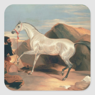 Arab Stallion Square Sticker