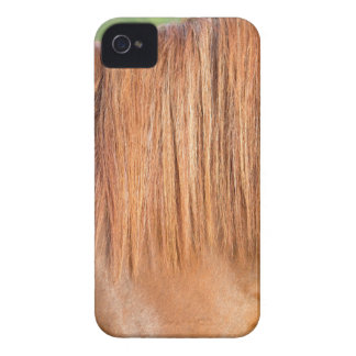 Arabian brown horse in pasture close view of mane Case-Mate iPhone 4 cases