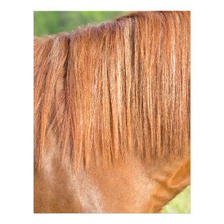 Arabian brown horse in pasture close view of mane letterhead