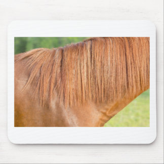 Arabian brown horse in pasture close view of mane mouse pad