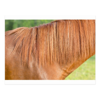 Arabian brown horse in pasture close view of mane postcard