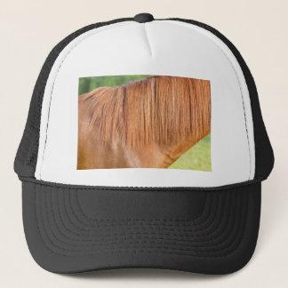 Arabian brown horse in pasture close view of mane trucker hat