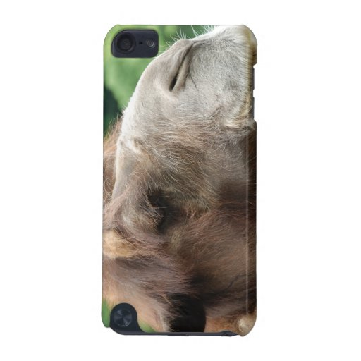 Arabian Camel iTouch Case iPod Touch (5th Generation) Cover